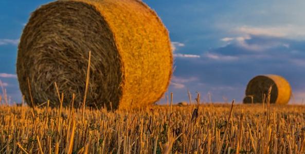 Ilustrační obrázek pro článek Postup pri nadobúdaní vlastníctva poľnohospodárskeho pozemku. Časť 2.