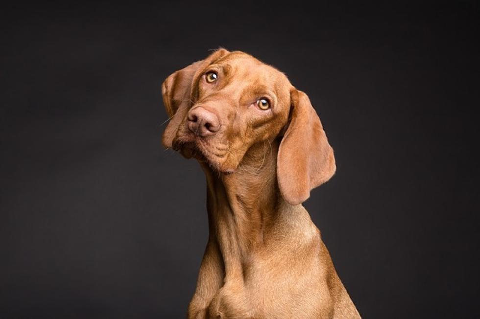 Ilustrační obrázek pro článek Daň za psa