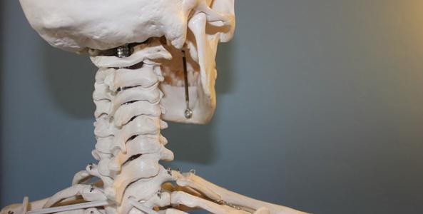 Ilustrační obrázek pro článek Právna ochrana ľudského tela po smrti