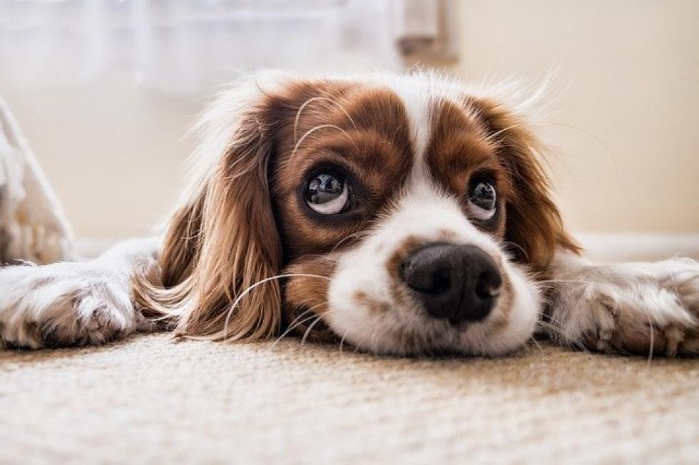 Ilustrační obrázek pro článek Způsobil Váš pes nějakou škodu?